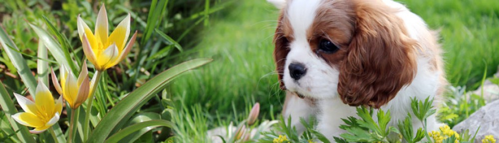 angelgin kennel