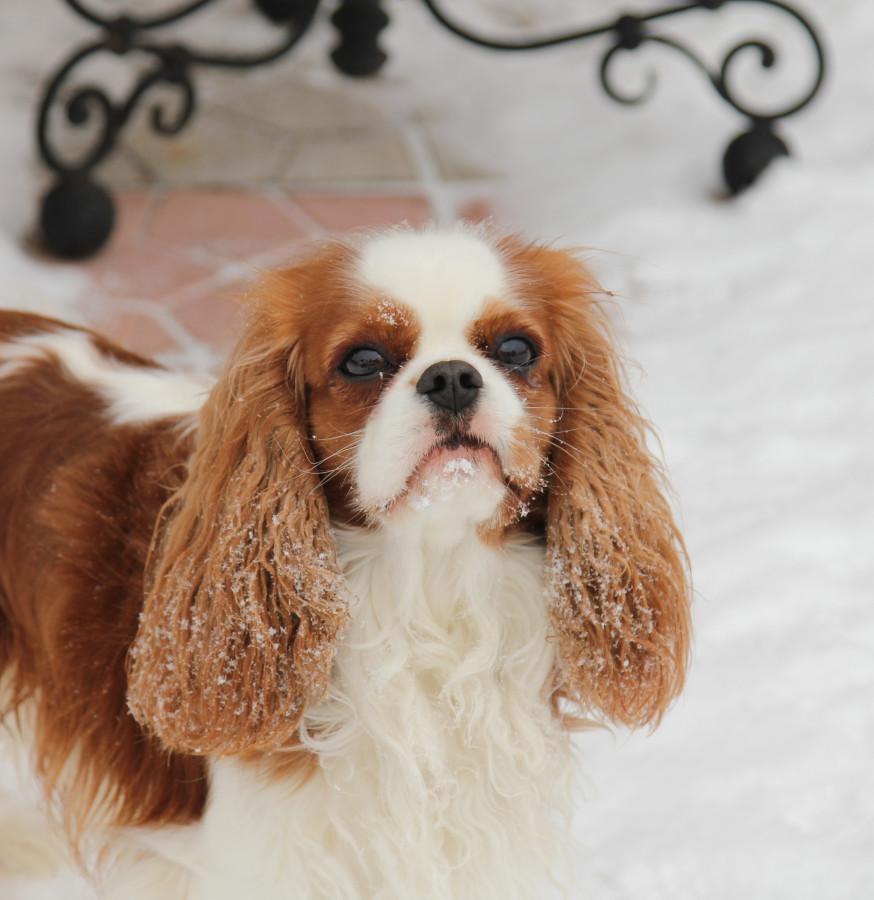 снег улица портрет