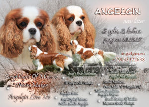 "Angelgin ""E"" litter"