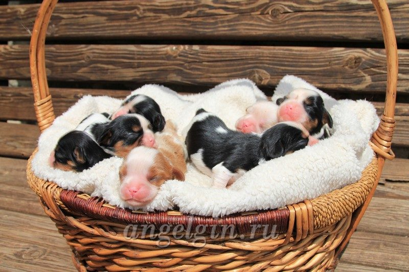 angelgin B litter